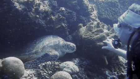 Schildkröte und Ursula 500