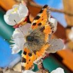Schmetterling_150